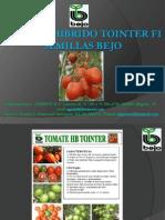 Tomate Hibrido Tointer