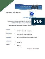 Columna_De_Winograsky_(02).docx