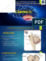 cerebelo2-130603214044-phpapp02