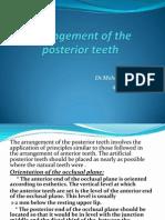 Arrangement of the Posterior Teeth