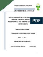 Biofertilizacion Del Pimiento Morron
