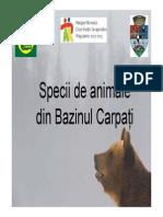 BAZINUL CARPATI Animale - Prezentare