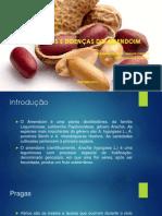 Pragas Amendoim - Copia
