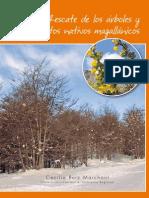 Árboles y arbustos de Magallanes