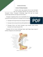 anatomi konjungtiva