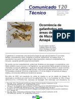Ocorrência de Gafanhotos em Áreas de Cerrados de Mazagão, Amapá