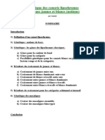 Edc Notions Genetique Lipochromes Jaunes Blancs