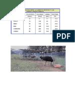 Avestruz tabela comparaçao.pdf