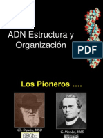 ADN Estructura y Organización