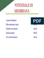 Lezione5 8potenzialedimembranae d'Azionedazione