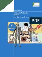 201310020831480.Guia Didactica 4basico Periodo3 Ciencias Naturales