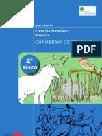 Cuaderno de Trabajo 4basico Periodo4 Ciencias Naturales (1)