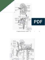 Kidney Slideshow