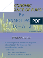 Biology-Economic Importance of Fungi