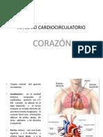 APARATO CARDIOCIRCULATORIO