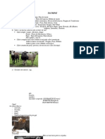 Taurine Caracteristici Generale