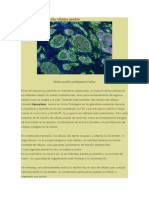 La inteligencia de las células madre -CIENCIA Y RELIGIÓN -9P