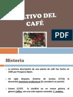 CULTIVO DEL CAFÉ Y SUS PLAGAS PRNCIPALES