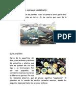 LIBRO 4 WEBQ