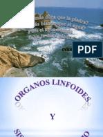Organos Linfoidees y Sistema Iunmunitario