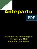 Ante Part Um Pregnancy