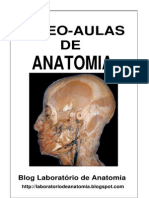 Anatomia Vídeo-aulas