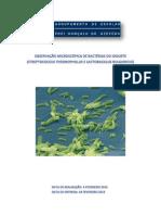 OBSERVAÇÃO MICROSCÓPICA DE BACTÉRIAS DO IOGURTE -STREPTOCOCCUS THERMOPHILLUS E LACTOBACILLUS BULGARICUS-