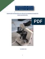 OBSERVAÇÃO MICROSCÓPICA DE CÉLULAS DA EPIDERME DO BOLBO DA CEBOLA -ALLIUM CEPA-