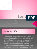 POWER POINT PERROS FINAL.pptx
