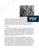 Description of Pinapple Parts and Propagation