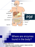 enzymes in digestion