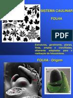 13 - Morfologia Externa Folha