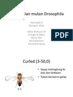Pengenalan Mutan Drosophila