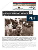 Sacrificio de 6000 Cabras Por El AVE en Inglaterra
