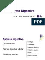 Copia (2) de Aparato Digestivo