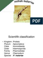 F. Plasmodium Malariae