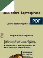 Dds Sobre Leptospirose