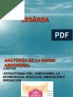 TÉCNICAS DE CESÁREA1