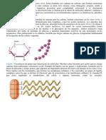 Biomoléculas orgánicas.docx