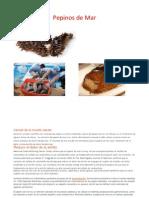 Pepinos de Mar.docx