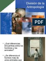 División de la Antropología