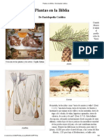 Plantas en la Biblia - Enciclopedia Católica