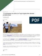13 variedades de cultivo de Trigo Irrigado têm elevada produtividade __ Governo do Estado de Mato Grosso