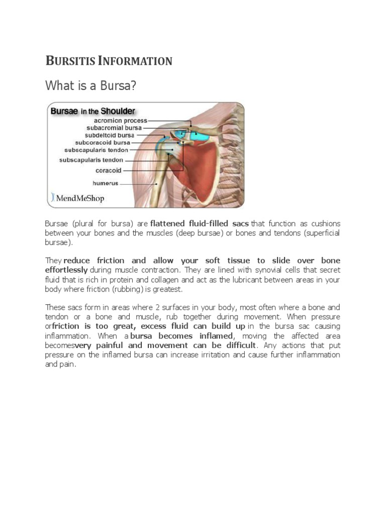 Bursae Gallery - human anatomy organs diagram