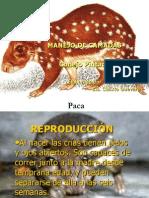 presentacindecamadas-110310112815-phpapp01