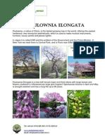 Paulownia Elongata Presentation En