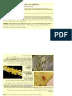 Biología de Coccinellidae
