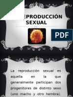la reproduccion sexual.ppt