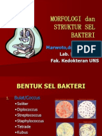 Morfologi Dan Struktur Kuman