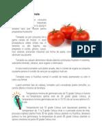 Cultura de Tomate